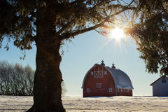 A red barn under a sunburst. Old red barn framed by a spruce trees overhanging limbs Royalty Free Stock Photo