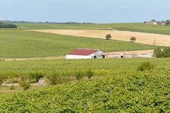 Red barn on vineyard Royalty Free Stock Photo