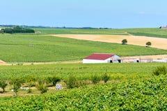 Red barn on vineyard Royalty Free Stock Photos