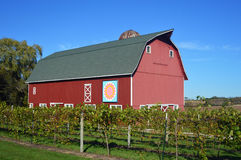 Red Barn with Vineyard Stock Photography