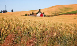 Red Barn Wheat Field Palouse Washington Stock Photo