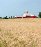Red Barn and Wheat Field Royalty Free Stock Photography