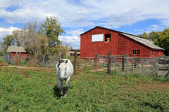 Red barn  and a white horse. Stock Image