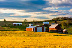 Red barns on a farm in rural York County, Pennsylvania. Royalty Free Stock Photo