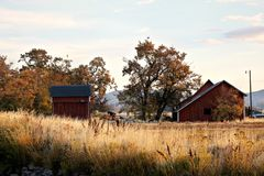 Red barns in a field with grass in the fall stock image