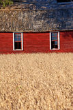 Red Barns and Golden Wheat in Rural Michigan Royalty Free Stock Photos