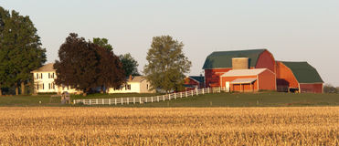 Red Barns- Grand Ledge. Red barns with white farm house and white fence. Foreground of cut corn field left from last fall Stock Image