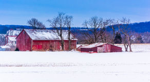 Red barns in a snow-covered field in rural York County, Pennsylv Royalty Free Stock Photography