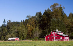 Red Barns in Summer Royalty Free Stock Photography