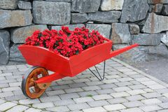 Red barrow with flowers. Photo of a red, old barrow wtih red flowers stock image