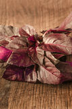 Red basil fresh leaves Royalty Free Stock Photo