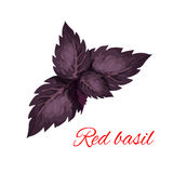Red basil herb leaves  emblem. Red basil herb leaves  icon. Vector emblem of red basil herb dressing culinary spice and cooking ingredient for decoration Royalty Free Stock Photo