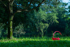 Red Basket in Grasses under Tree Royalty Free Stock Photos