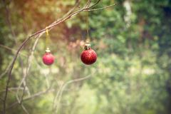 Red bauble on branch outdoors. Christmas decoration Royalty Free Stock Photo