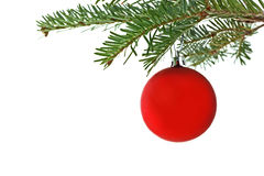 Red bauble on Christmas tree. Close up of decorative red bauble on Christmas tree branch, isolated on white background Royalty Free Stock Image