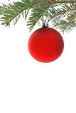 Red bauble on Christmas tree. Close up of red bauble hanging from branch of Christmas tree, white background Royalty Free Stock Photos