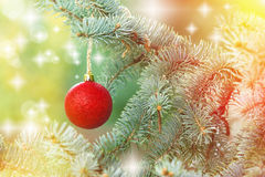 Red bauble on Christmas tree Stock Photography