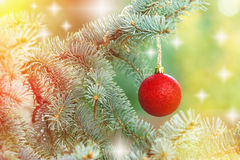 Red bauble on Christmas tree (xmas ball) Royalty Free Stock Photo
