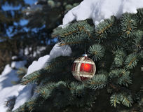 Red bauble on conifer branch in the forest. Red bauble on fir-tree branch with snow in the forest. Christmas and New Year card royalty free stock photos