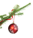 Red bauble on conifer branch. Traditional Christmas and New Year decoration with red lace on natural conifer branch, isolated on white stock photo