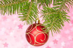 Red bauble on the fir branch Stock Image