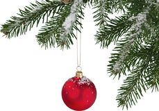 Red bauble on green christmas fir tree royalty free stock images