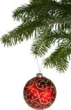 Red bauble on green christmas fir tree royalty free stock photography
