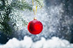 Red bauble on green christmas fir tree on royalty free stock images