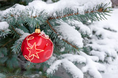 Red bauble hangs from Christmas tree outdoors Stock Photography