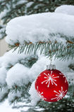 Red bauble hangs from Christmas tree under snow Royalty Free Stock Image