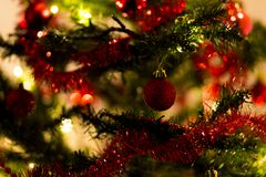 Red baubles on a Christmas tree. Red baubles on a branch with warm lights in the background Stock Photography