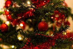 Red baubles on a Christmas tree. Red baubles on a branch with warm lights in the background Royalty Free Stock Image