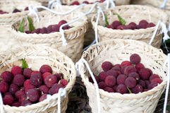Red bayberry Stock Photography