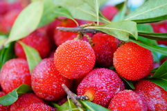 Red bayberry Stock Photos