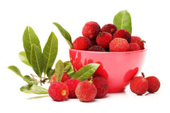 Red bayberry Stock Images
