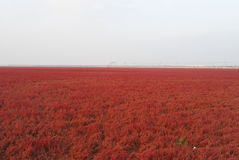 Red Beach In the fall Stock Photo