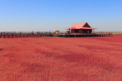 Red Beach of Panjin in China Stock Images