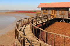 Red Beach of Panjin in China Stock Photos