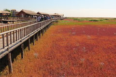 Red Beach of Panjin in China Royalty Free Stock Photo