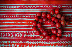 Red beads from  dog-rose  berries Royalty Free Stock Images