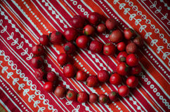 Red beads from  dog-rose  berries Royalty Free Stock Image