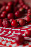 Red beads from  dog-rose  berries Royalty Free Stock Photo