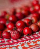 Red beads from  dog-rose  berries Royalty Free Stock Photos