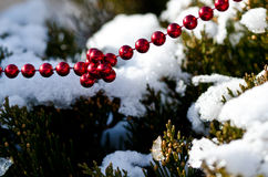 Red Beads Strung on the Outdoor Christmas Tree Stock Image