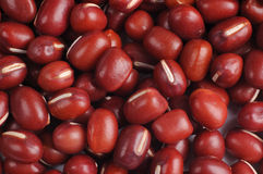 Red bean Royalty Free Stock Images