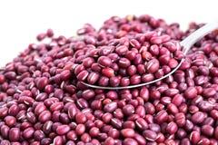 Red bean adzuki Stock Photography