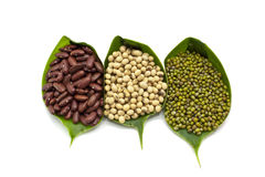 Red bean, Green bean, and Soy bean Stock Images