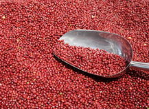 Red bean. The picture is red bean in the supermarket.Red beans can be made into a variety of delicious food, has high nutritional value. Often used in the stock photos