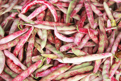 Red bean pods Stock Images