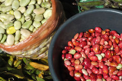 Red beans and broad beans. Royalty Free Stock Images